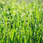 Spring grass wallpaper